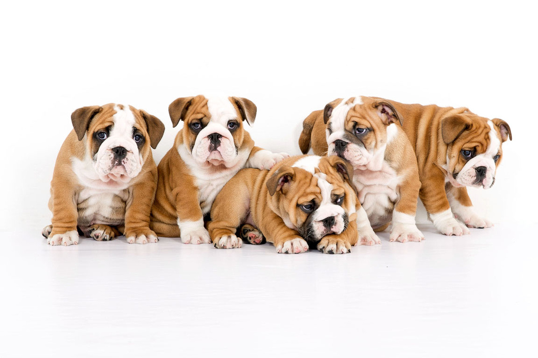 Leading Imagery photography, pet photography in Chesterfield.